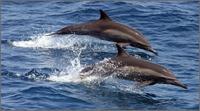 Dolphinsx